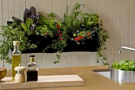 all you need to know about starting an indoor garden simple
