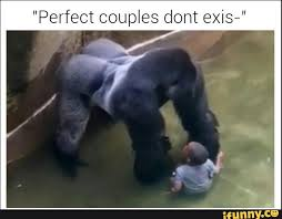 Funny Gorilla Memes - gorilla perfectcouple meme funny ifunny