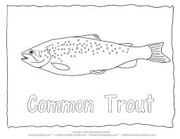 salmon fish coloring page salmon coloring page common trout coloring page brown trout pictures