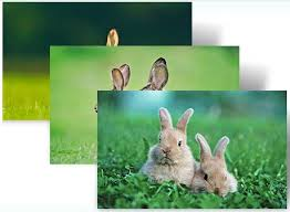 theme google chrome rabbit download year of the rabbit windows 7 themes