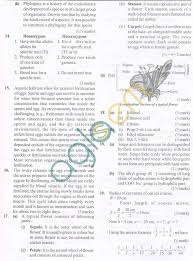 11 best cbse images on pinterest assessment sample paper and