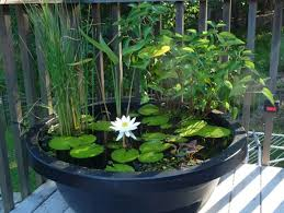 Mini Water Garden Ideas Big Ideas In Spaces Water Gardening In A Small Area