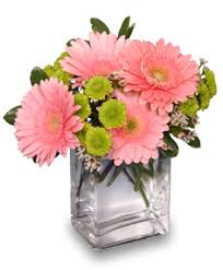 gerbera bouquet fruit sorbet gerbera bouquet in talladega al gaither s florist