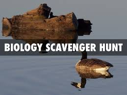 biology scavenger hunt by ryan russell