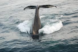 whale seal watching tours cruises tours parks u0026 aquariums