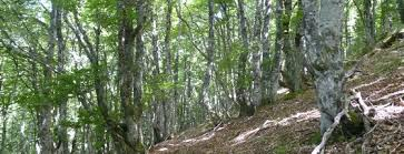 chambre agriculture 34 forêt arbres et bois chambres d agriculture