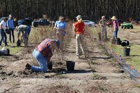 australian native plant society native plants find new homes after dee research ends clemson