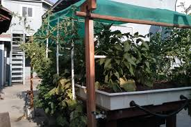 expect an increase in aquaponics farming garden culture magazine