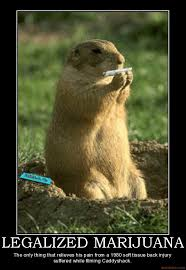 Gopher Meme - caddy shack gopher weed memes legalize cannabis weed memes