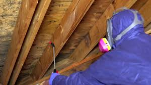 mold x2 kills mold in crawl spaces and attics u0026 helps prevent