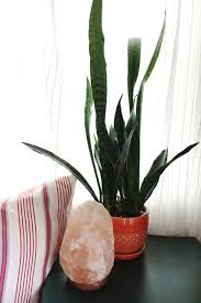 plants for bathrooms with no light