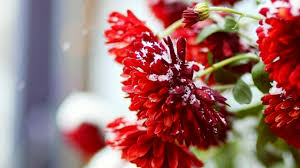 summer flower winter flowers