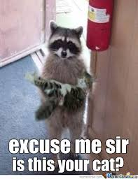 Raccoon Excellent Meme - polite raccoon by fartfart meme center