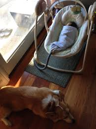 corgi u0027s love for his new baby sister knows no bounds huffpost