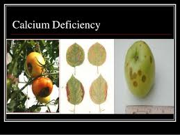Deficiency Diseases In Plants - nutrients deficiency symptoms in plants