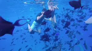 swimming with sharks in bora bora youtube