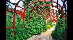 beautiful vertical vegetable garden youtube