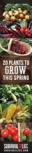 50 best gardening goodness images on pinterest gardening garden