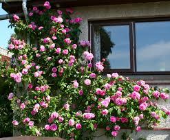 scottish artist and his garden september 2013