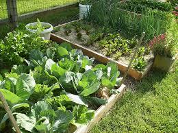 best raised vegetable garden raised vegetable garden design