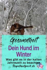 M El Rundel Wohnzimmer 25 Einzigartige Adventskalender Für Hunde Ideen Auf Pinterest