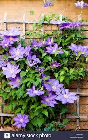 trellis garden wall stock photos u0026 trellis garden wall stock