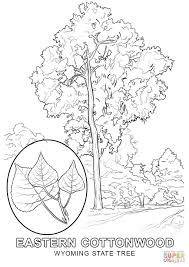 wyoming state tree coloring page free printable coloring pages