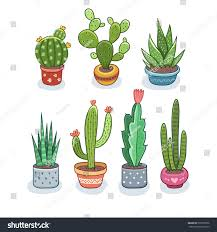 cactus succulents pots vector illustration isolated stock vector