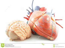 Ear Anatomy And Function Heart Muscle Anatomy Images Learn Human Anatomy Image