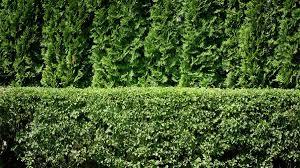 outdoor noise blocking plants wearefound home design