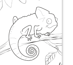 amazon rainforest animals coloring pages free printable pictures