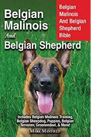 american bulldog x belgian malinois american bulldog bible and the american bulldog your perfect