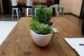 office plant office plants