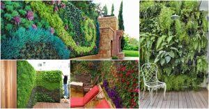 posts with diy vertical garden tag top dreamer