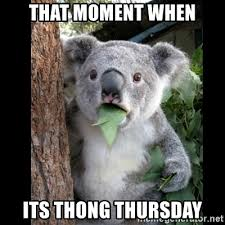 Thong Thursday Memes - that moment when its thong thursday koala can t believe it meme