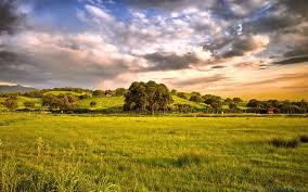 beautiful green grassland photography 1920x1200 hd wallpapers