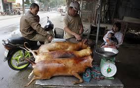 chien cuisiné 101 repas étranges et dégoûtants dans le monde chambre237