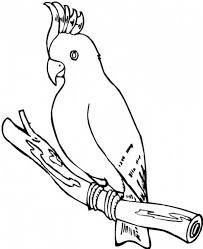 parrot coloring parrot coloring sheet sheets pages
