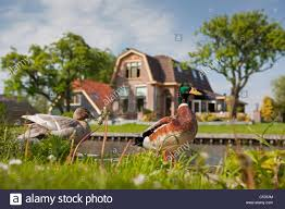 Giethoorn Holland Homes For Sale by Giethoorn Village Holland Netherlands Stock Photo Royalty Free