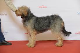Barak hound