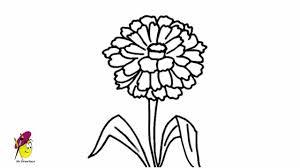 zinnia flower how to draw flowers youtube