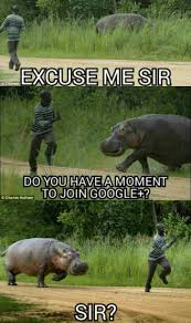 Hippo Memes - google plus hippo is ready to social media all over africa