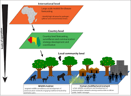what factors might have led to the emergence of ebola in west