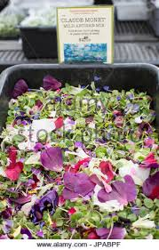 edible flowers for sale greens and edible flowers at sebastopol farmer s market sonoma