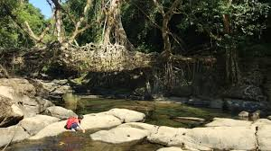 What Is Root Bridge Meghalaya India Wettest Place In The World Cnn Travel