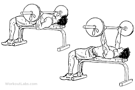 Muscles Used During Bench Press Improve Your Bench Press In 4 Weeks Predator Nutrition