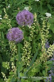 277 best bulbs rhizomes tubers perennial bulb type thingies