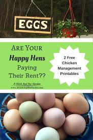 backyard chickens for sale 619 best chickens u0026 turkeys hbn images on pinterest keeping