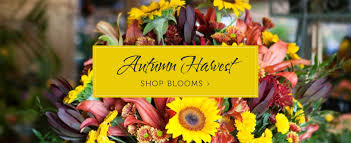 flower shops in miami miami florist flower delivery by hirni s wayside garden florist