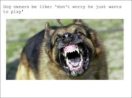 Dog Owner Meme - the best dog owners memes memedroid